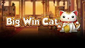 Big-Win-Cat_Banner-bingobonussen.dk